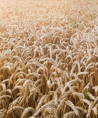 img_usecase_cereals_big_crop