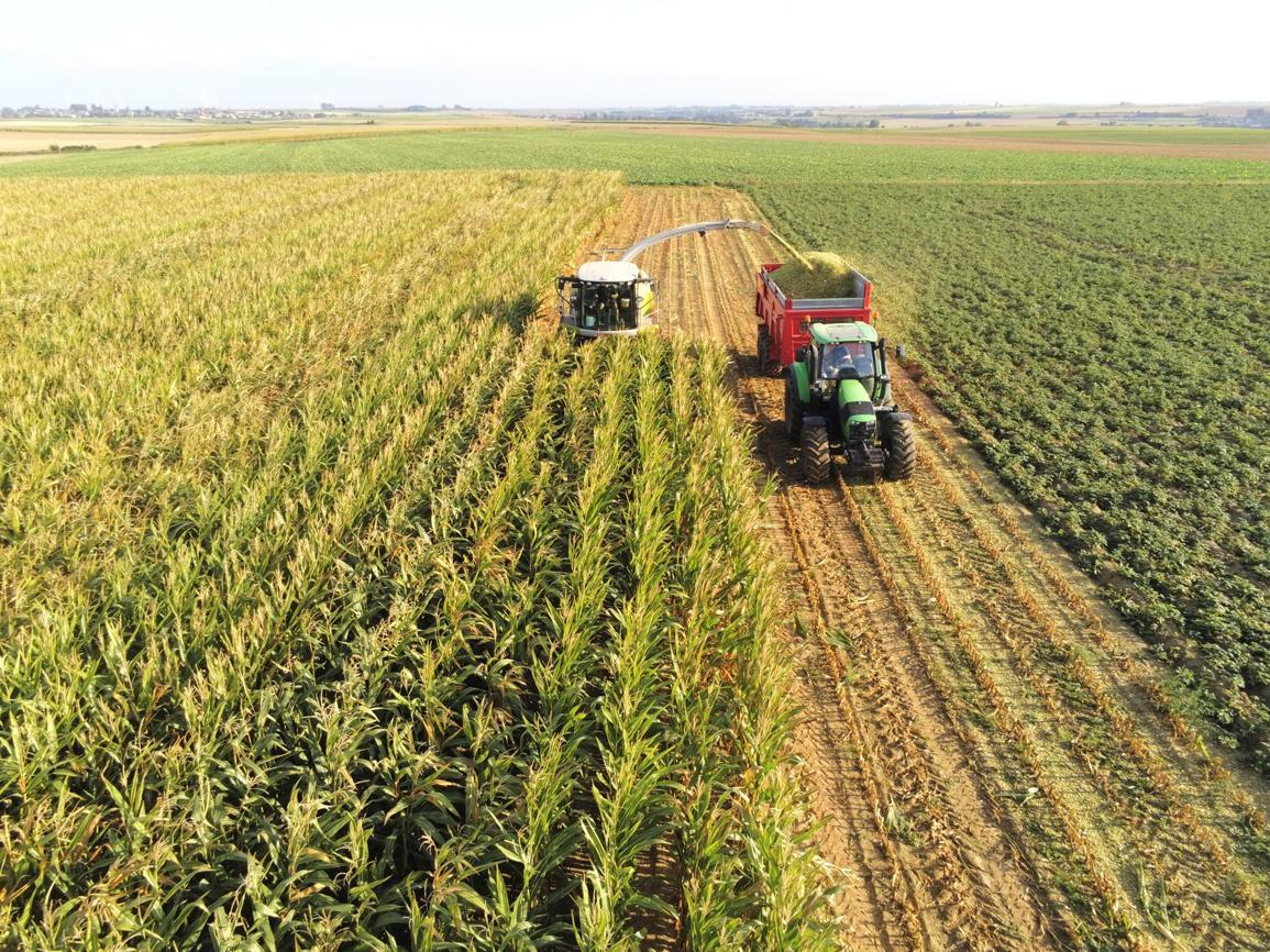 ensilage maïs